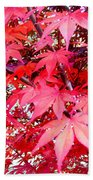 Japanese Maple Leaves 11 In The Fall Beach Towel