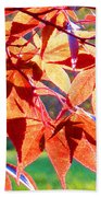 Japanese Maple Leaves 6 In The Fall Beach Towel