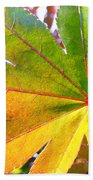 Japanese Maple Leaves 7 In The Fall Beach Towel
