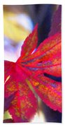 Japanese Maple Leaves In The Fall Beach Towel