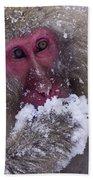 Japanese Snow Monkey Beach Towel