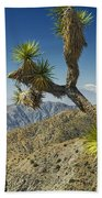 Joshua Trees Number 357 Beach Towel