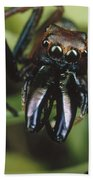 Jumping Spider Portrait, Queensland Beach Towel