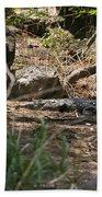 Juvenile Nile Crocodile Beach Towel