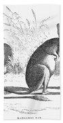 Kangaroo Rat Beach Towel