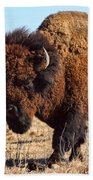 Kansas Buffalo Beach Towel