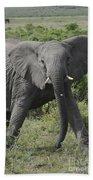 Kenya Masai Mara Charging Elephant  Beach Towel