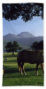 Killarney,co Kerry,irelandtwo Horses Beach Towel