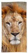 King Of Beasts Portrait Of A Lion Beach Towel