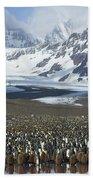 King Penguin Aptenodytes Patagonicus Beach Sheet
