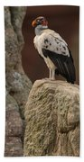 King Vulture Sarcoramphus Papa Perched Beach Towel by Pete Oxford