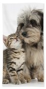 Kitten And Daxie-doodle Puppy Beach Towel