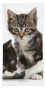 Kitten Pals Beach Towel