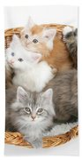 Kittens In Basket Beach Towel