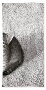 Kitty's Shadow Beach Towel