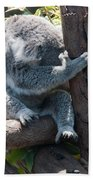 Koala Beach Towel by Carol Ailles
