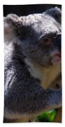 Koala In A Gum Tree Beach Towel