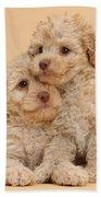 Labradoodle Puppies Beach Towel