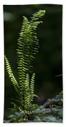 Lacy Wild Alabama Fern Beach Towel