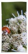 Ladybug Atop The Flowers Beach Towel