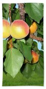 Lake Country Apricots Beach Towel