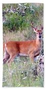 Lake Country Buck Beach Towel