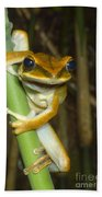 Large Arboreal Hylid Frog Beach Towel