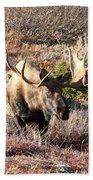 Large Bull Moose Beach Towel