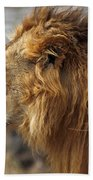 Large Male Lion Emerging From The Bush Beach Towel