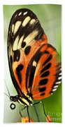 Large Tiger Butterfly Beach Towel