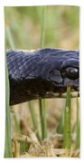Large Whipsnake Coluber Jugularis Beach Towel