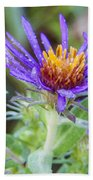 late Summer Fleabane Beach Towel