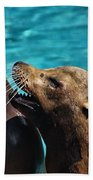 Laughing Seals Beach Towel