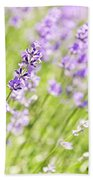 Lavender Blooming In A Garden Beach Towel