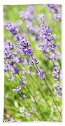 Lavender In Sunshine Beach Towel by Elena Elisseeva
