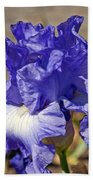 lavender Iris Beach Towel