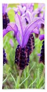 Lavenders Beach Towel