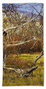 Leaf Barren White Tree Trunk In California No.1500 Beach Towel