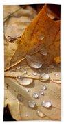 Leaf Doplets Beach Towel by LeeAnn McLaneGoetz McLaneGoetzStudioLLCcom