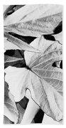 Leaf Study In Black And White Beach Towel