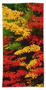 Leaves On Trees Changing Colour Beach Towel