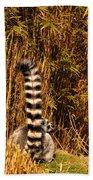 Lemur Tail Beach Towel
