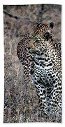 Leopard Hunt Beach Towel