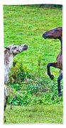Leopard V Standardbred Beach Towel