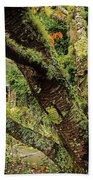 Lichen Covered Apple Tree, Walled Beach Towel
