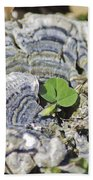 Lichen The Shamrock Beach Towel