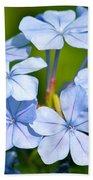 Light Blue Plumbago Flowers Beach Towel by Carol Groenen
