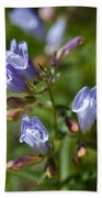 Light Purple Wild Penstemons  Beach Towel