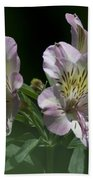 Lily - Liliaceae 3 Beach Towel