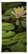 Lily Pads And Blossoms. No186 Beach Towel